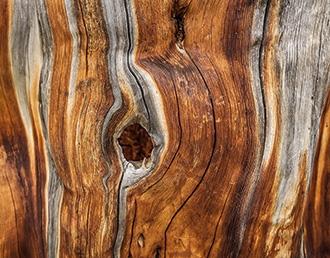Holz Wirtschaft Graubünden